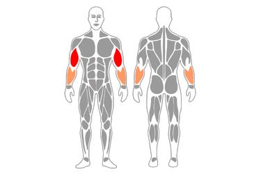 Curl de biceps a dos manos con cable-polea de pie