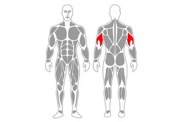 Extensión de tríceps de pie con polea